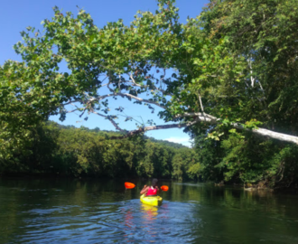 woman in kayak enjoying the float on the river going under a large branch over the water Downriver Canoe Company Shenandoah Valley River